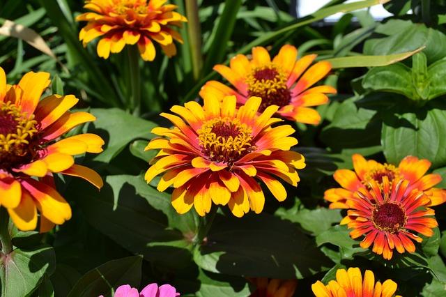 5 fiori autunnali facili da coltivare tuttogreen for Immagini fiori autunnali