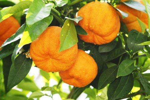 neroli - arancio amaro
