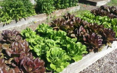 Orto: come coltivare la terra per piacere e per nutrirsi