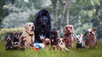 Photo of Scelta del cane: dimmi chi sei e ti dirò che cane avrai