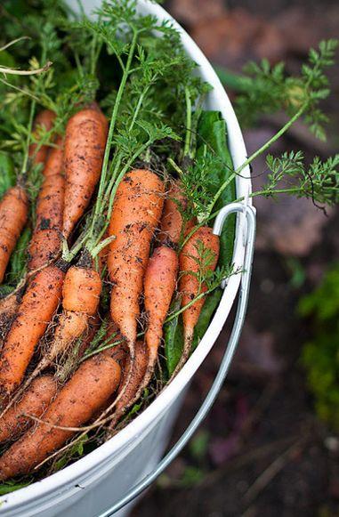 coltivare carote in vaso
