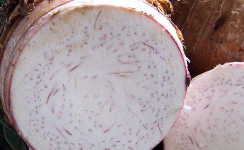 Photo of Colocasia esculenta o taro, il tubero polinesiano da mangiare