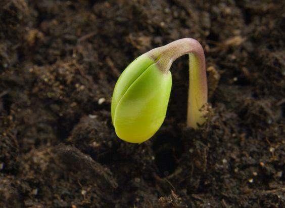 Photo of Coltivazione cavolo: la guida pratica