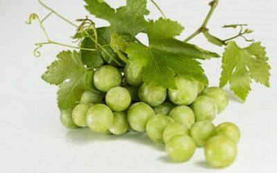 Dieta dell'uva: benefici, ricette e controindicazioni