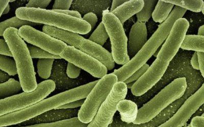 Probiotici: cosa sono, benefici e dove trovarli