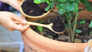 Photo of Tutti i modi per riutilizzare i fondi di caffè, dal giardinaggio alla cosmesi