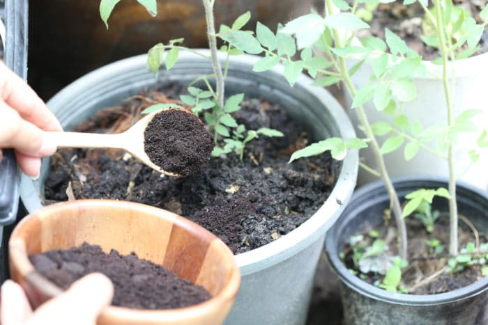 fondi di caffè per piante