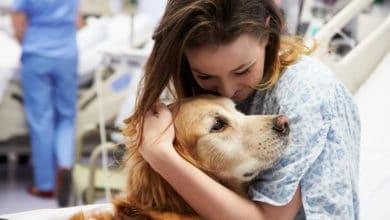 Photo of Cos'è la pet therapy o zooterapia: benefici e cose da sapere