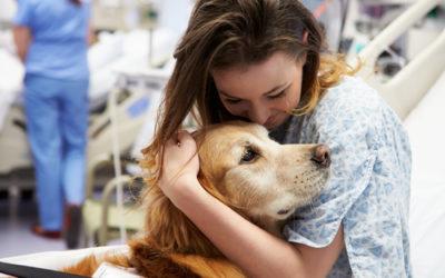 Cos'è la pet therapy o zooterapia: benefici e cose da sapere