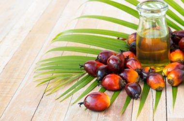 L'olio di palma fa male: effetti su salute e ambiente