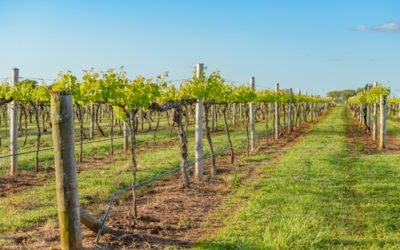 Tutto sul vino biodinamico e le differenze da quello biologico