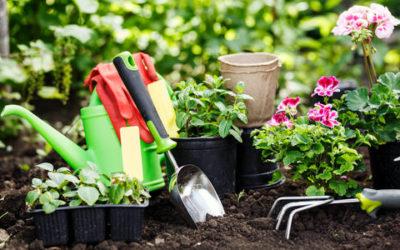 Giardinaggio come curare le piante e se stessi tuttogreen for Curare le piante
