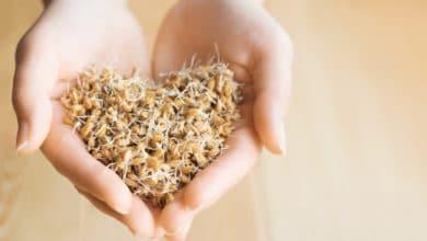Photo of Scopriamo un alimento ricco di proprietà benefiche: i germogli di grano