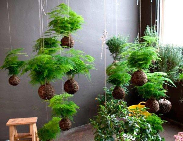 Photo of Mini giardini da interni: la nuova frontiera del giardinaggio domestico