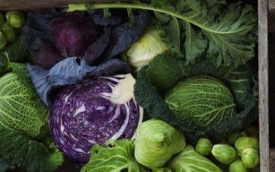 Cavolo cappuccio: proprietà, benefici e ricette