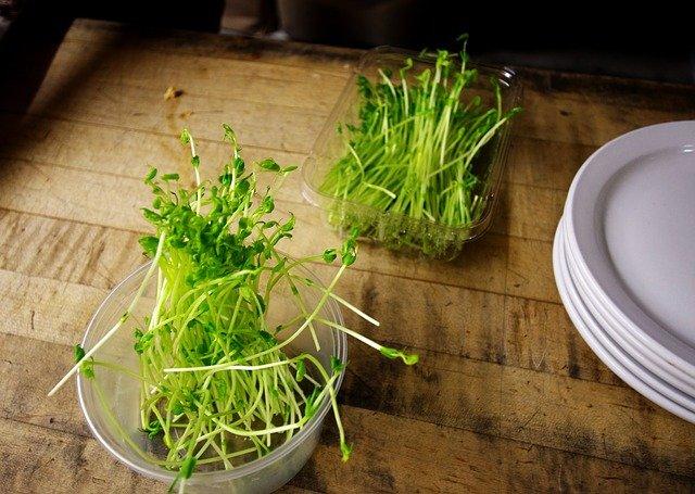 Photo of Germogli di lenticchie: proprietà e utilizzi in cucina