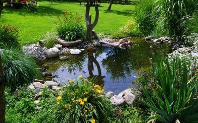 Laghetto o stagno da giardino ecco come farlo tuttogreen for Stagno giardino