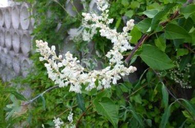 Scopriamo tutte le varietà di piante rampicanti, dalle sempreverdi alle fiorite