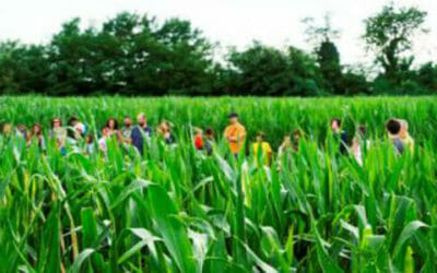 Curiosità, il labirinto di mais per tutti… anche per i ciclisti!