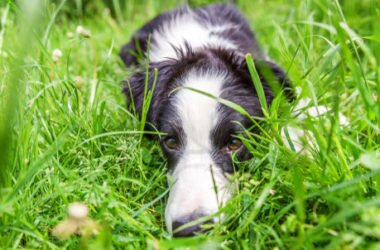 Perché i cani mangiano l'erba? Alcune spiegazioni…