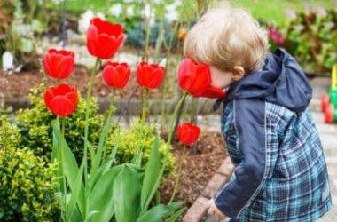 Come coltivare tulipani in vaso e a terra: tutti i trucchi da conoscere