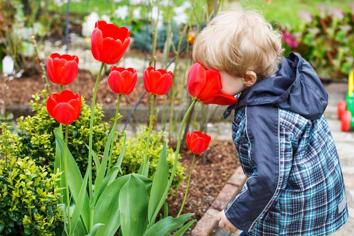Come Si Piantano I Tulipani coltivare tulipani è facile: scoprite la nostra guida pratica