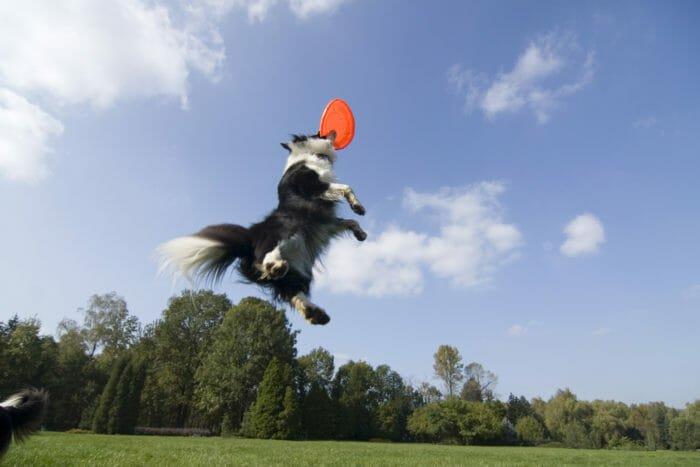 parco giochi per cani