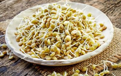 Germogli di lenticchie: proprietà e utilizzi in cucina