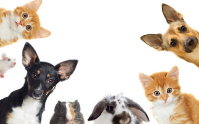 Come curare gli animali domestici in modo naturale
