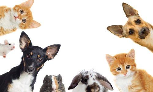 Photo of Come curare gli animali domestici in modo naturale