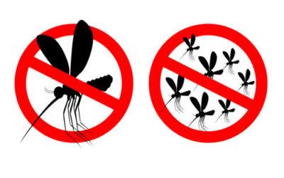 Rimedi naturali contro le zanzare: quali sono