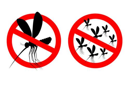 Rimedi naturali contro le zanzare quali sono tuttogreen - Rimedi contro le zanzare in giardino ...