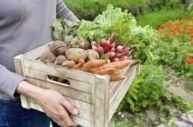 Orto in casa: come coltivare in casa frutta, verdura e altro