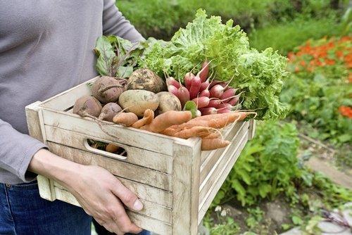 Photo of Orto in casa: come coltivare in casa frutta, verdura e altro