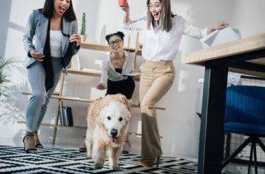 Portati il cane in ufficio e lavorerai meglio!