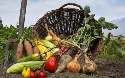 Guida ai vantaggi dell'agricoltura biologica, benefici e certificazioni