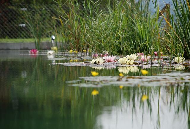 Laghetto o stagno da giardino ecco come farlo tuttogreen for Immagini di laghetti artificiali