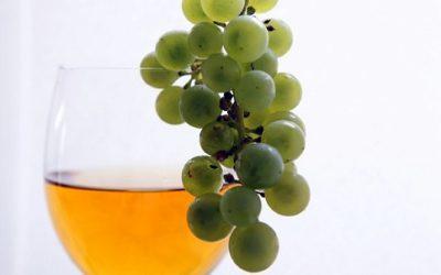 Fermentazione alcolica: come funziona e a cosa serve