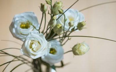 Lisianthus o Eustoma: i consigli per una fioritura perfetta