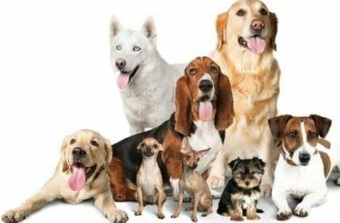 Scopriamo le razze di cani secondo le classificazioni, quelle più belle e più interessanti