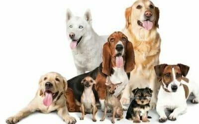 Tutte Le Razze Di Cani Più Belle E Interessanti Al Mondo Tuttogreen
