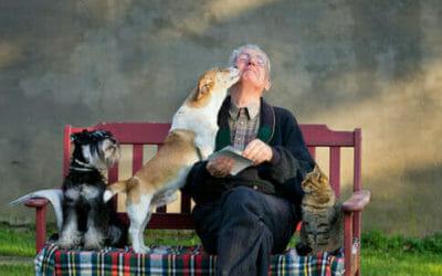 Cani da compagnia: razze, caratteristiche, educazione