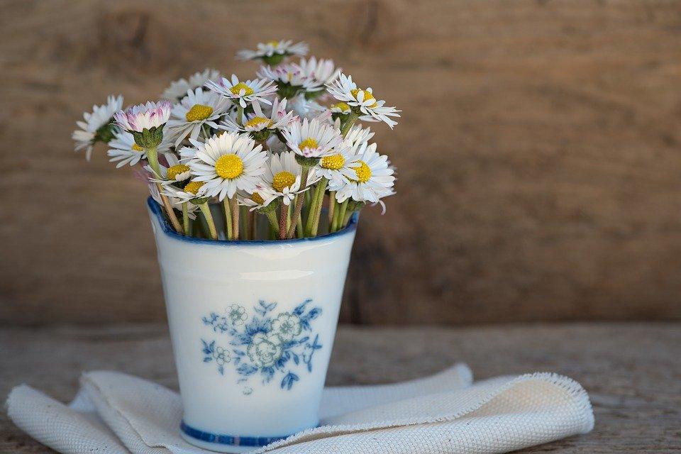 Photo of Margherita, fiore dei prati: ecco tanti consigli pratici