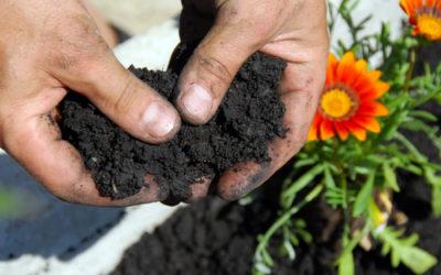 Come rendere il terreno acido? La guida pratica