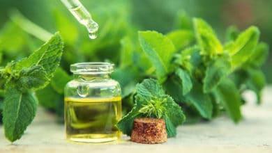 Photo of Alla scoperta della menta piperita, una delle erbe aromatiche più rinomate