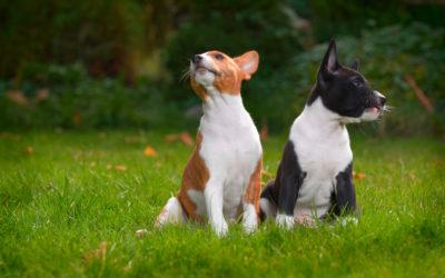 Conosci l'impronta ecologica di cani e gatti?