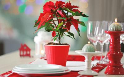 Come conservare la Stella di Natale ben oltre le feste