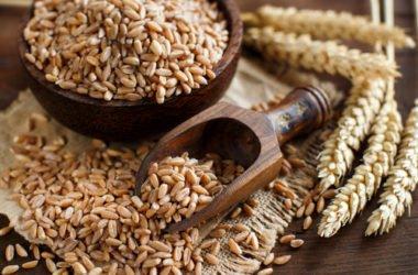 Benefici e proprietà del farro, ricette e utilizzi