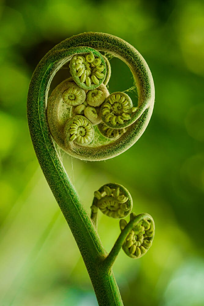 Photo of Le proprietà della felce: una pianta della salute che vi sorprenderà