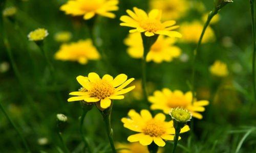 Photo of Fiori gialli, i più belli per dare luce al giardino